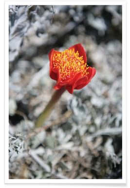 Mountain Flower Poster