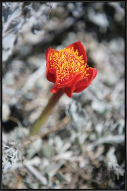 Mountain Flower -Bild mit Kunststoffrahmen