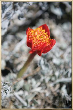 Mountain Flower Poster in Aluminium Frame