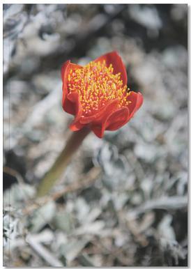 Mountain Flower Notebook