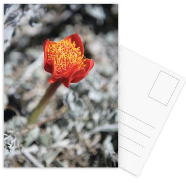 Mountain Flower -Postkartenset