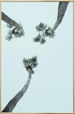 Palm Springs -Poster im Alurahmen