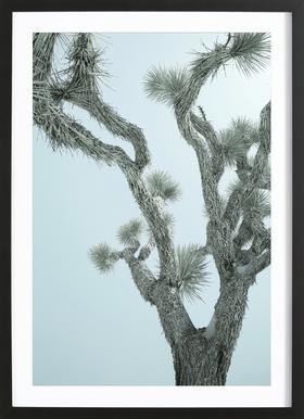 Joshua Tree -Bild mit Holzrahmen