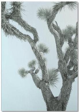 Joshua Tree -Notizblock