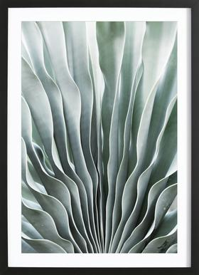 Boophane Framed Print