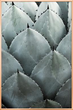 Agave -Poster im Alurahmen