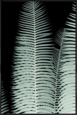Cycas -Bild mit Kunststoffrahmen