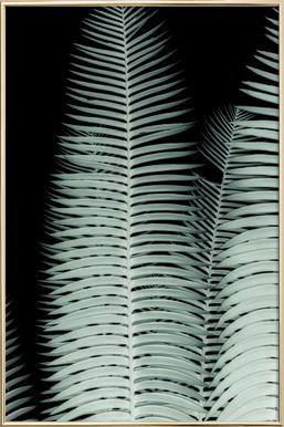 Cycas Poster in Aluminium Frame