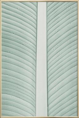 Strelitzia 01 Poster in Aluminium Frame
