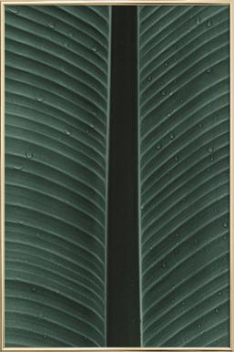 Strelitzia 02 -Poster im Alurahmen