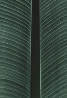 Strelitzia 02 -Acrylglasbild
