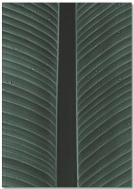 Strelitzia 02 Notebook