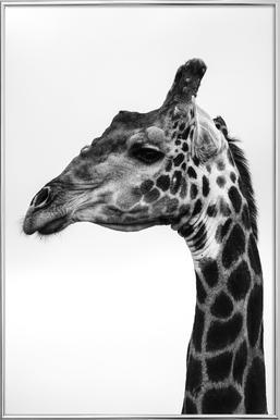 Giraph -Poster im Alurahmen