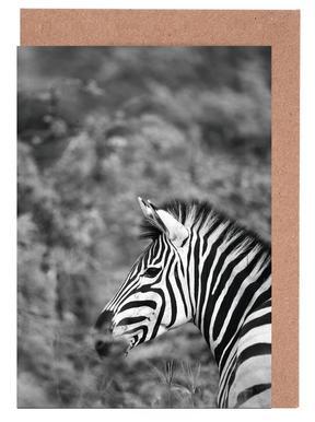 Zebra Greeting Card Set