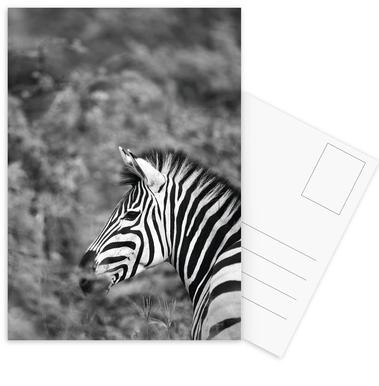 Zebra Postcard Set