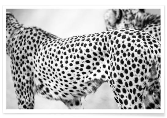 Cheetah -Poster