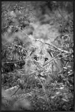 Lion -Bild mit Kunststoffrahmen
