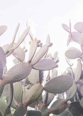 Desert Prince 2 -Leinwandbild