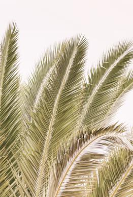 Oasis Palm 1