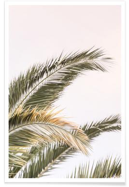 Oasis Palm 3 - Premium poster