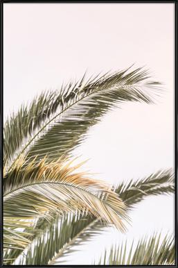 Oasis Palm 3 - Poster in Standard Frame