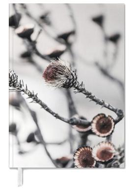 Swartberg Protea 2