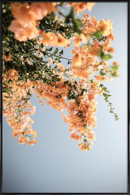 Assos Blooms