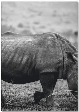 Black Rhino -Notizblock