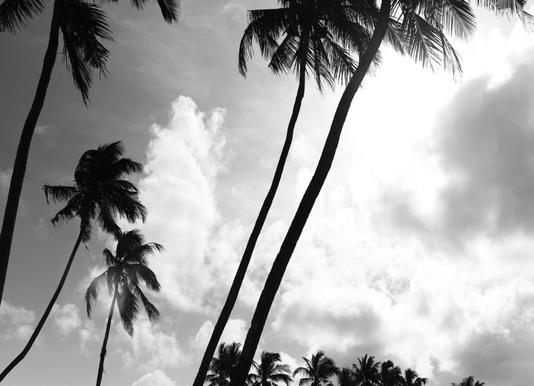 Coco Island 2 -Leinwandbild