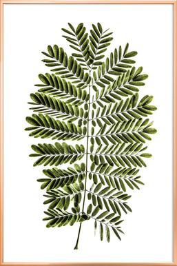 Leaf Study 2