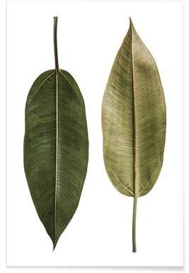 Leaf Study 5 poster