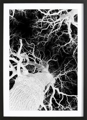 Oak Tree 2 -Bild mit Holzrahmen