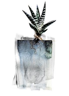 Aloe -Leinwandbild