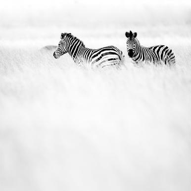 Africa Cropped 04 -Leinwandbild