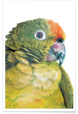 Birds of Paradise 05b