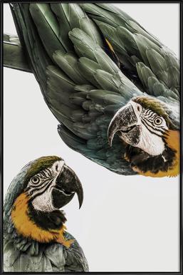Birds of Paradise 01 ingelijste poster