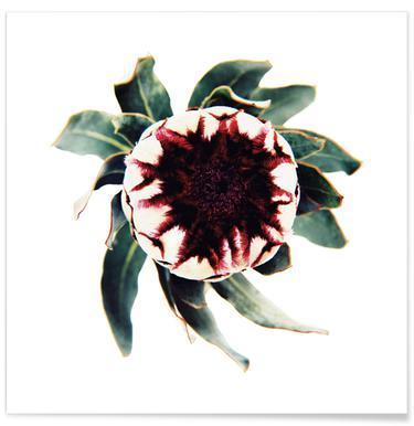 Classic Botanical Flowers 12 affiche