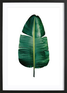 Classic Botanical Leaves 09 Framed Print