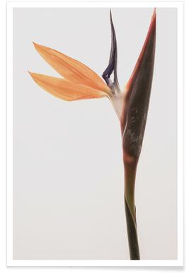Queens Flower Poster