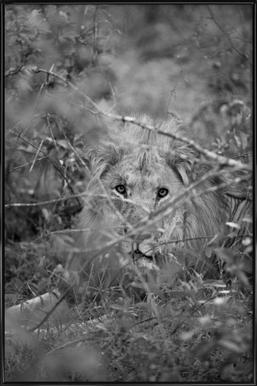 Safari 01