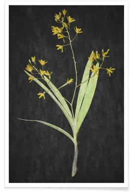 Muti Orchid Poster