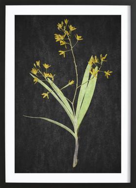 Muti Orchid -Bild mit Holzrahmen