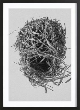 Weaver Nest Framed Print