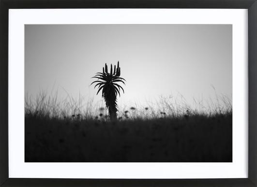 Aloe Ridge Framed Print