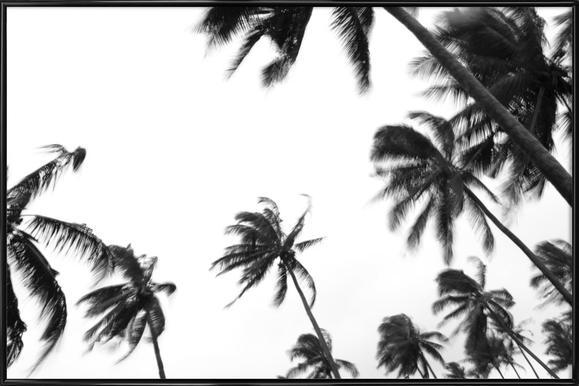 Pemba Palms - Affiche sous cadre standard