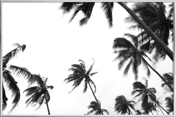 Pemba Palms Poster in Aluminium Frame