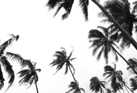 Pemba Palms -Alubild