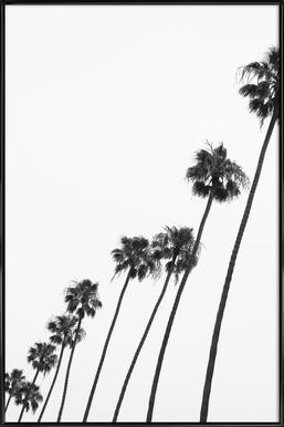 Cali Palms -Bild mit Kunststoffrahmen