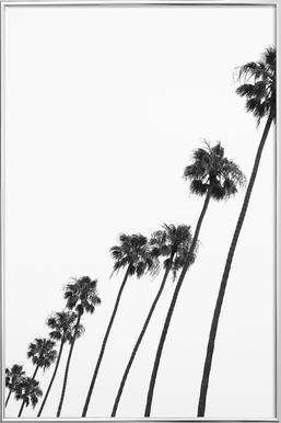 Cali Palms -Poster im Alurahmen