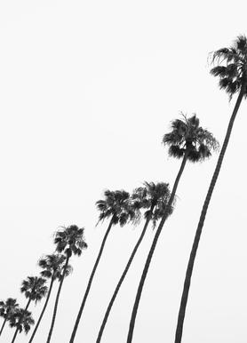 Cali Palms Canvas Print